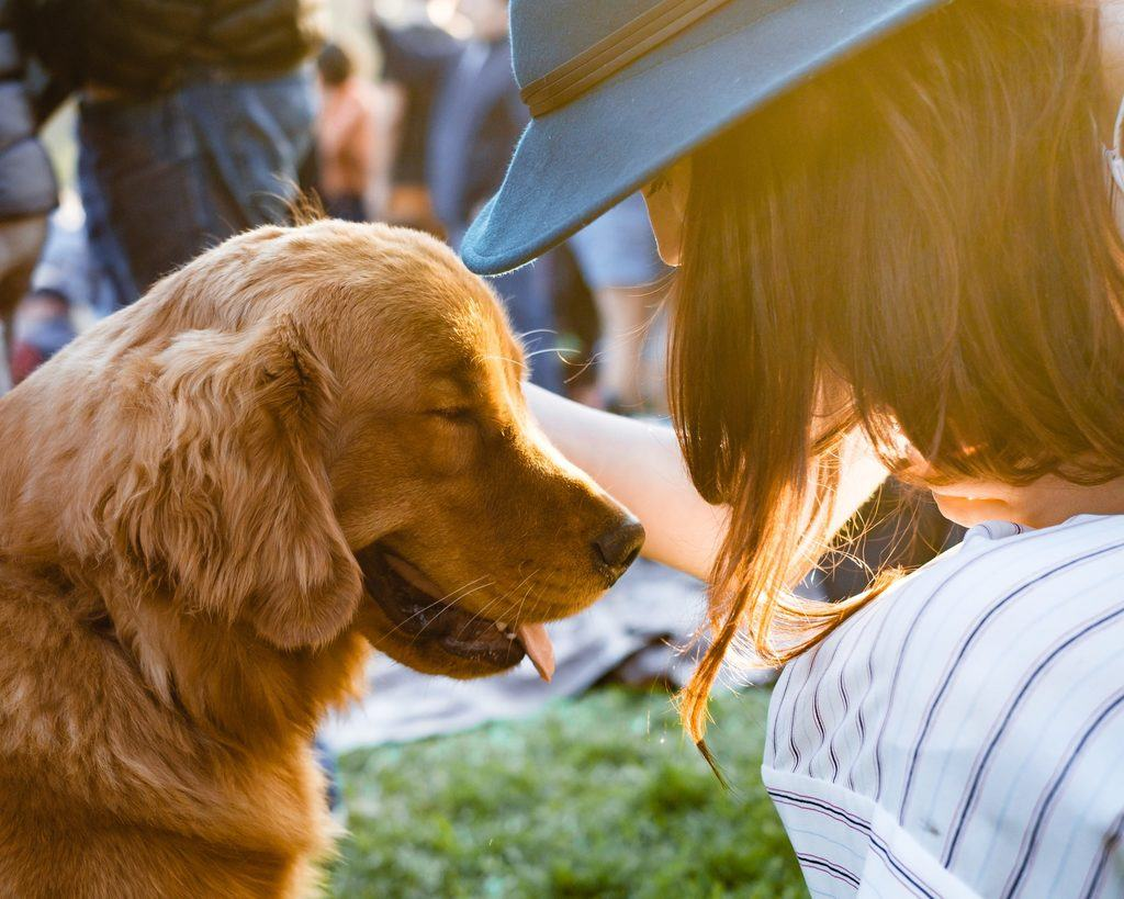 how to get a service dog everything you need to know