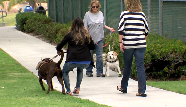 Veteran with PTSD says her service dog didn